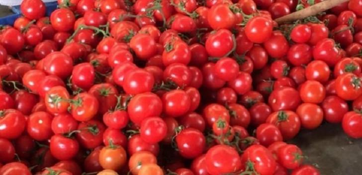 Rusiya Azərbaycan pomidorunda xəstəlik aşkarlayıb