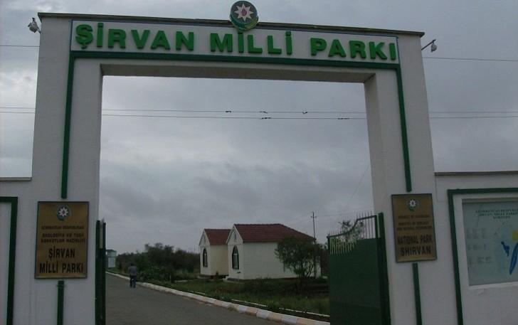 Brakonyerlər Şirvan Milli Parkının əməkdaşına atəş açdı