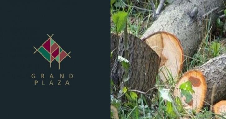 """""""Grand Plaza"""" MMC ağacları kəsdiyinə görə məhkəməyə verildi"""