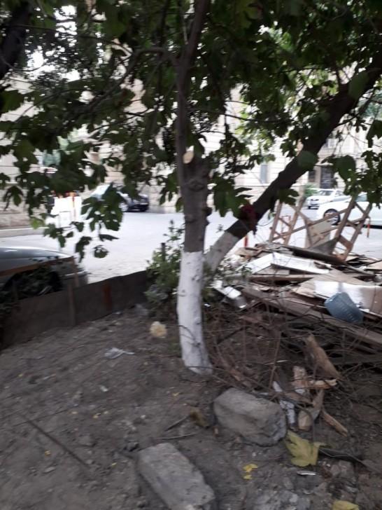 Ağacların kəsilməsi ilə bağlı daxil olan şikayət yerində araşdırılıb