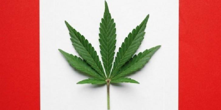 Kanadada marixuana qıtlığı: