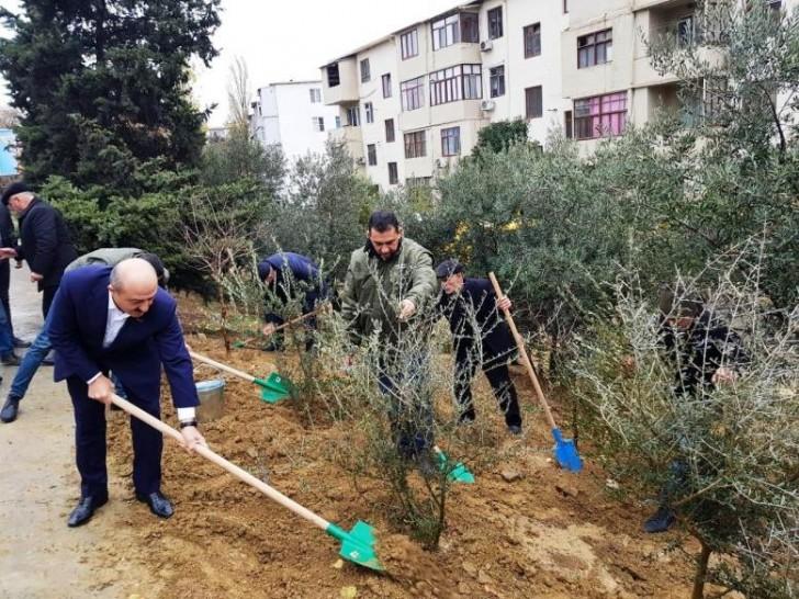 Qurumuş və təhlükə yaradan ağacların yerinə 1700-ə yaxın müxtəlif cinsli ağac əkilib