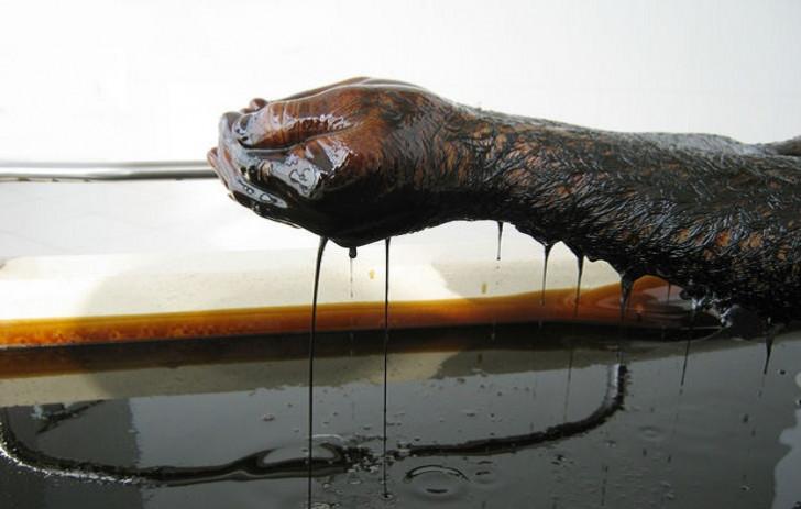 Azərbaycan mayda neft hasilatı ilə bağlı öhdəliyini tam yerinə yetirib