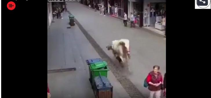 At küçədə gedən qadını belə öldürdü-