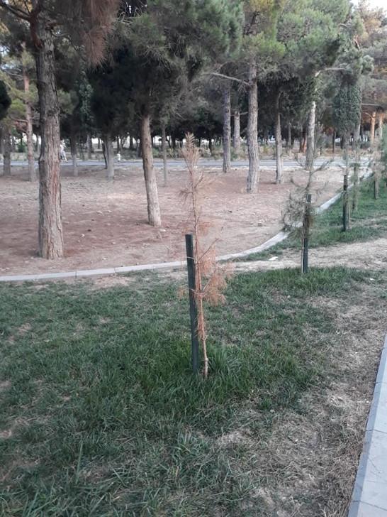 3 ay əvvəl açılışı olan park baxımsız vəziyyətdə  -